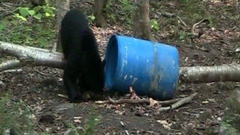 crossbow bear hunt
